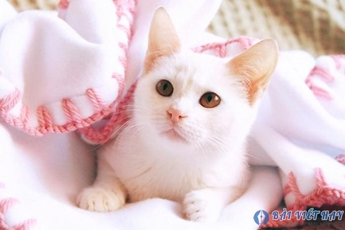 top 10 bai van mau ta con meo dat diem cao moi nhat 4 - Top 10 bài văn mẫu tả con mèo đạt điểm cao mới nhất