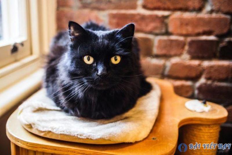 top 10 bai van mau ta con meo dat diem cao moi nhat 6 - Top 10 bài văn mẫu tả con mèo đạt điểm cao mới nhất