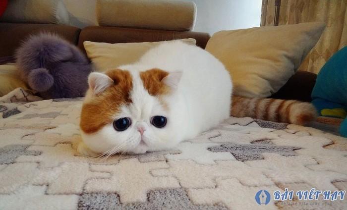 top 10 bai van mau ta con meo dat diem cao moi nhat 7 - Top 10 bài văn mẫu tả con mèo đạt điểm cao mới nhất