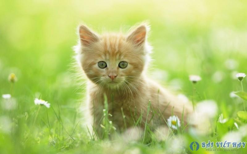top 10 bai van mau ta con meo dat diem cao moi nhat 8 - Top 10 bài văn mẫu tả con mèo đạt điểm cao mới nhất