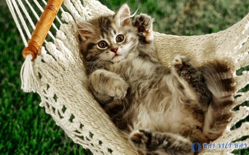 top 10 bai van mau ta con meo dat diem cao moi nhat 9 - Top 10 bài văn mẫu tả con mèo đạt điểm cao mới nhất