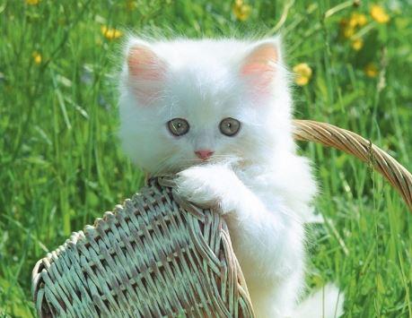 top 10 bai van mau ta con meo dat diem cao moi nhat - Top 10 bài văn mẫu tả con mèo đạt điểm cao mới nhất