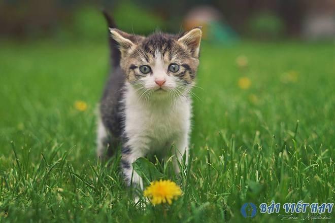 top 10 bai van mau ta mot con vat ma em yeu thich nhat 6 - Top 10 bài văn mẫu tả một con vật mà em yêu thích nhất