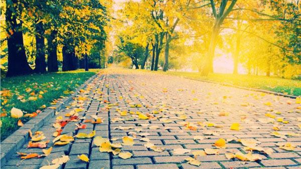 top 10 bai van ta canh mua thu tren que huong hay nhat - Top 10 bài văn tả cảnh mùa thu trên quê hương hay nhất
