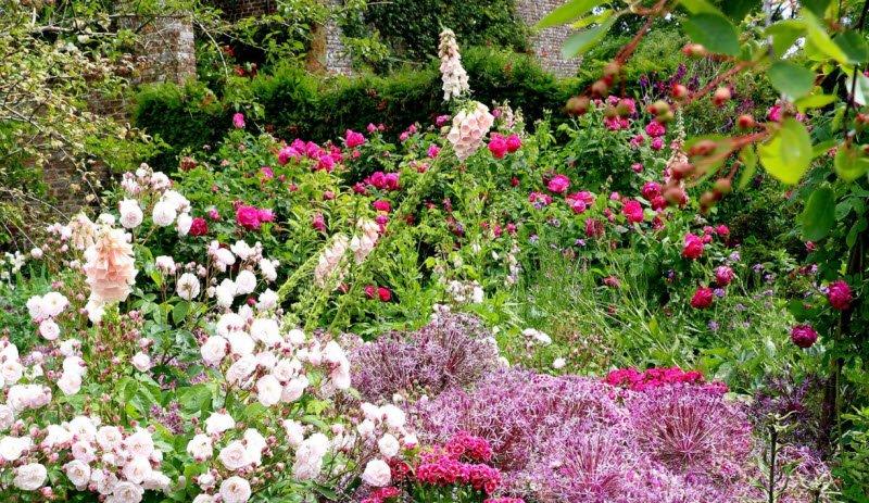 vuon hoa - Tả vườn hoa nhà em lớp 5 6 - 3 bài văn miêu tả vườn hoa ở trường ở nhà ngắn gọn