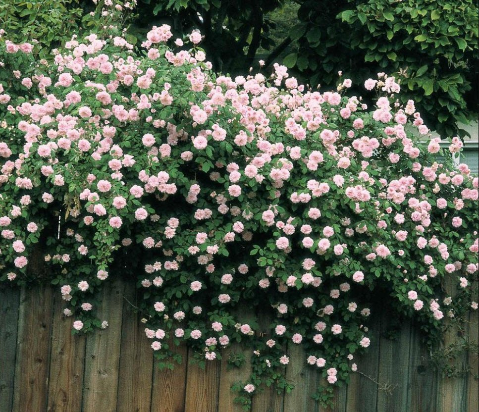 vuonhoa - Tả vườn hoa nhà em lớp 5 6 - 3 bài văn miêu tả vườn hoa ở trường ở nhà ngắn gọn