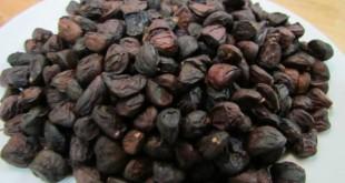 hat doi la gi 4 310x165 - Hạt dổi là gì? Có mấy loại hạt dổi? Cách sử dụng hạt dổi trong nấu ăn như thế nào?