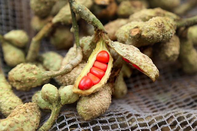 hat doi la gi - Hạt dổi là gì? Có mấy loại hạt dổi? Cách sử dụng hạt dổi trong nấu ăn như thế nào?