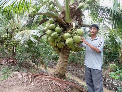 top 10 bai van mau ta cay dua que em 7 - Top 10 bài văn mẫu tả cây dừa quê em
