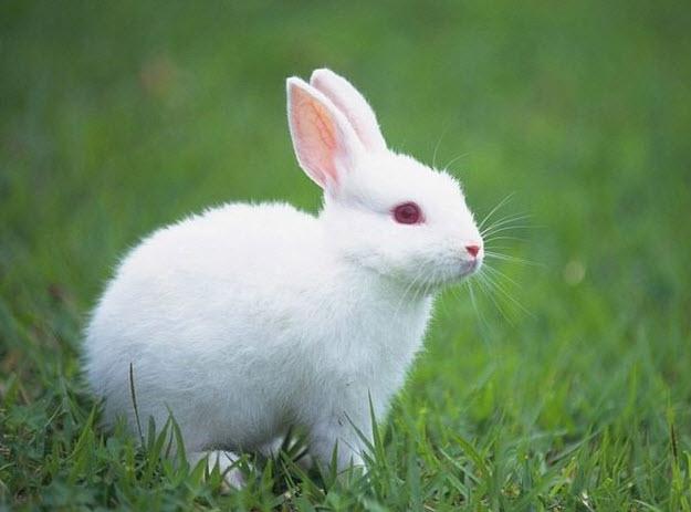 top 10 bai van mau ta con tho hay nhat 2 - Top 10 bài văn mẫu tả con thỏ hay nhất