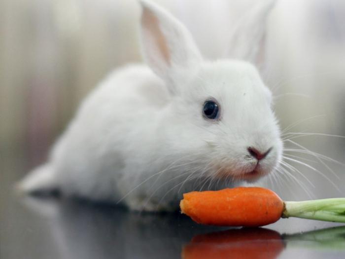 top 10 bai van mau ta con tho hay nhat 3 - Top 10 bài văn mẫu tả con thỏ hay nhất