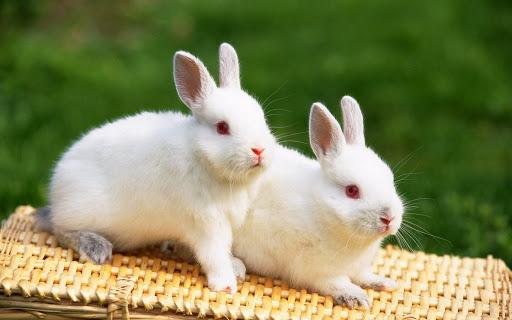 top 10 bai van mau ta con tho hay nhat 4 - Top 10 bài văn mẫu tả con thỏ hay nhất