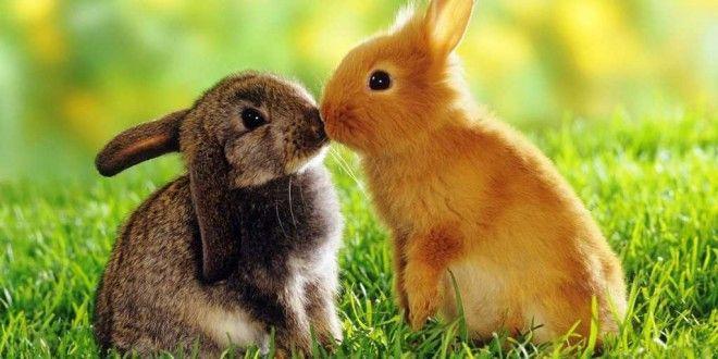top 10 bai van mau ta con tho hay nhat 5 - Top 10 bài văn mẫu tả con thỏ hay nhất