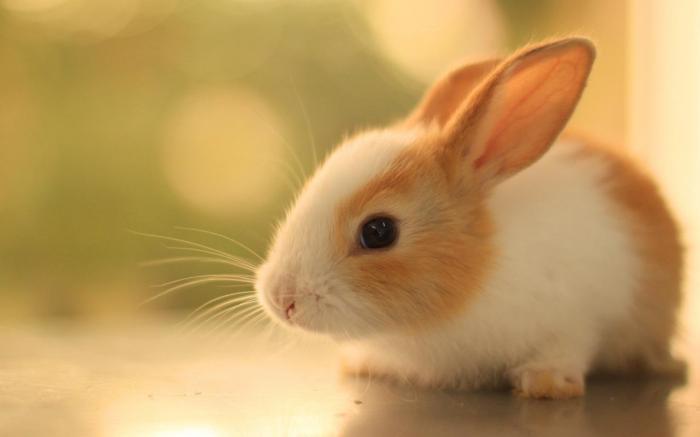 top 10 bai van mau ta con tho hay nhat 6 - Top 10 bài văn mẫu tả con thỏ hay nhất