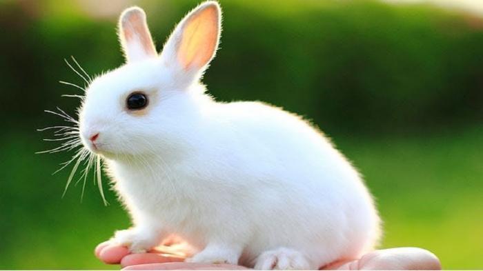top 10 bai van mau ta con tho hay nhat - Top 10 bài văn mẫu tả con thỏ hay nhất
