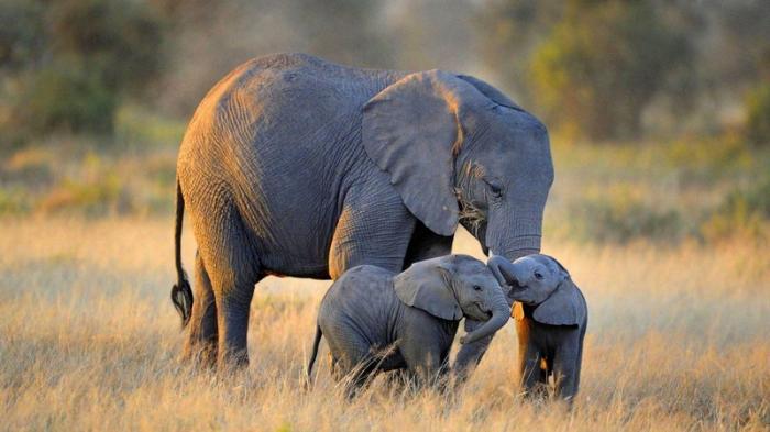 top 10 bai van mau ta con voi hay nhat 3 - Top 10 bài văn mẫu tả con voi hay nhất