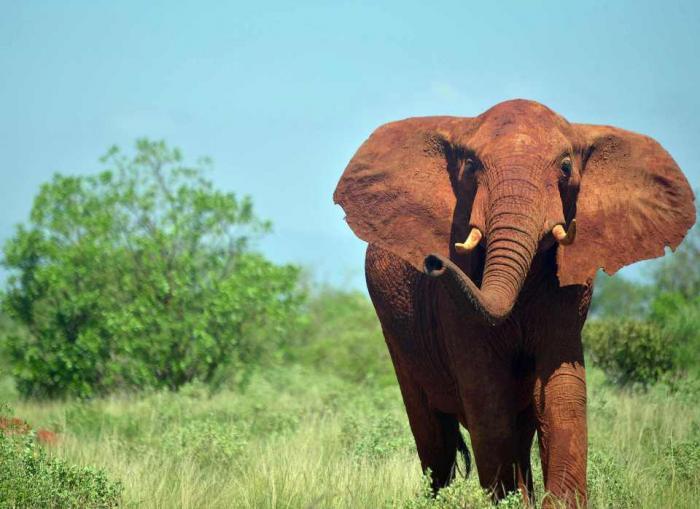 top 10 bai van mau ta con voi hay nhat 5 - Top 10 bài văn mẫu tả con voi hay nhất