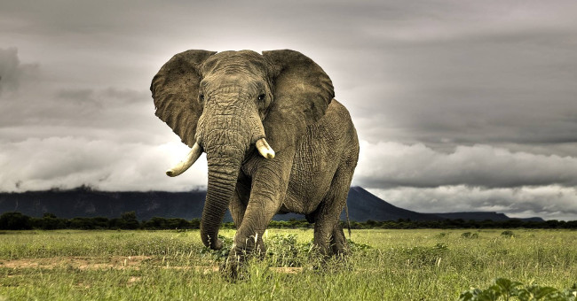 top 10 bai van mau ta con voi hay nhat 6 - Top 10 bài văn mẫu tả con voi hay nhất