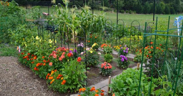 top 10 bai van mau ta khu vuon vao mot buoi sang dep troi 6 - Top 10 bài văn mẫu tả khu vườn vào một buổi sáng đẹp trời