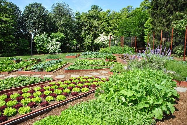 top 10 bai van mau ta khu vuon vao mot buoi sang dep troi 7 - Top 10 bài văn mẫu tả khu vườn vào một buổi sáng đẹp trời