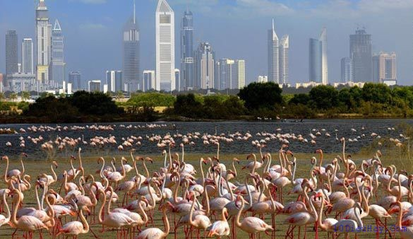 top 10 dia diem du lich dep noi tieng nhat o a rap xe ut 4 - Top 10 địa điểm du lịch đẹp nổi tiếng nhất ở Ả rập Xê út
