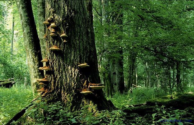 top 10 dia diem du lich dep noi tieng nhat o ba lan 3 - Top 10 địa điểm du lịch đẹp nổi tiếng nhất ở Ba Lan