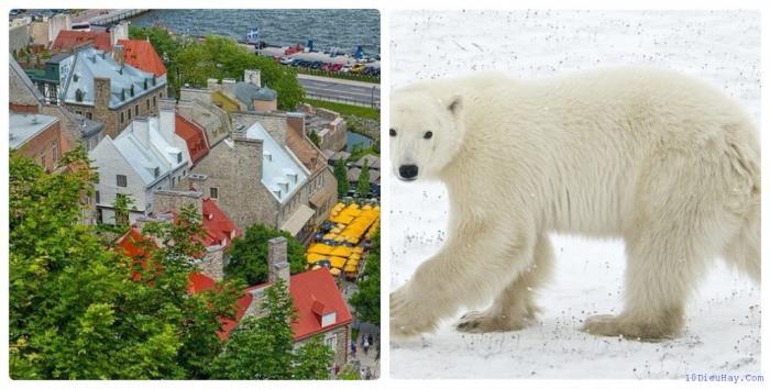 top 10 dia diem du lich dep noi tieng nhat o canada 9 - Top 10 địa điểm du lịch đẹp nổi tiếng nhất ở Canada