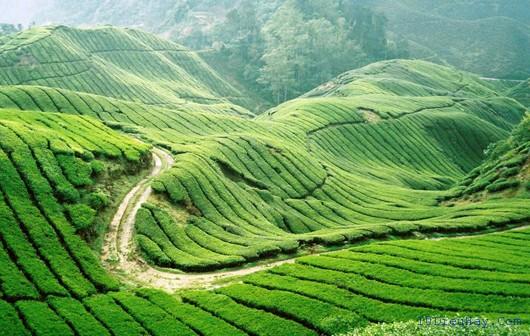 top 10 dia diem du lich dep noi tieng nhat o malaysia 5 - Top 10 địa điểm du lịch đẹp nổi tiếng nhất ở Malaysia