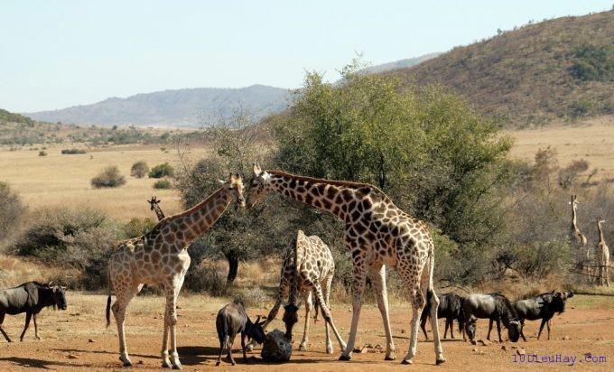 top 10 dia diem du lich dep noi tieng nhat o nam phi 9 - Top 10 địa điểm du lịch đẹp nổi tiếng nhất ở Nam Phi