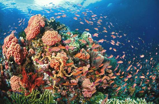 top 10 dia diem du lich dep noi tieng o philippines 4 - Top 10 địa điểm du lịch đẹp nổi tiếng ở Philippines