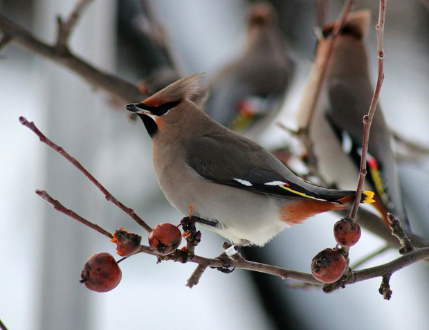 top 10 loai chim dep nhat the gioi 2 - Top 10 loài chim đẹp nhất thế giới