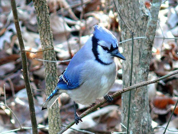 top 10 loai chim dep nhat the gioi 3 - Top 10 loài chim đẹp nhất thế giới