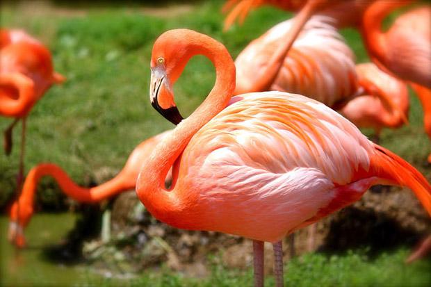 top 10 loai chim dep nhat the gioi 7 - Top 10 loài chim đẹp nhất thế giới
