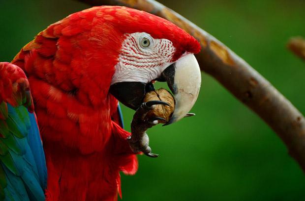 top 10 loai chim dep nhat the gioi 8 - Top 10 loài chim đẹp nhất thế giới
