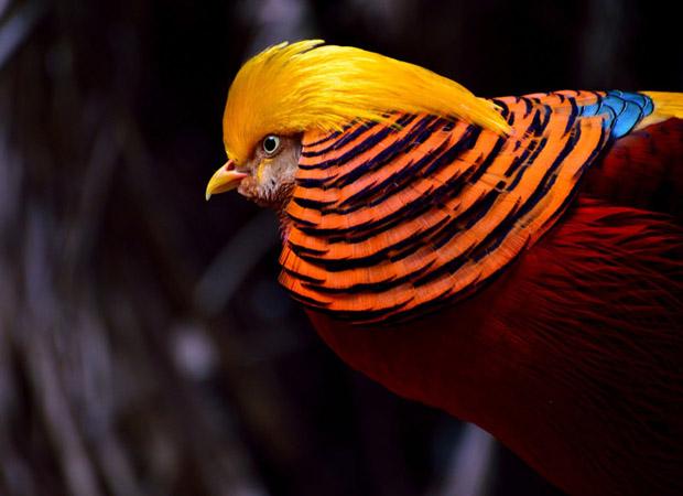 top 10 loai chim dep nhat the gioi 9 - Top 10 loài chim đẹp nhất thế giới