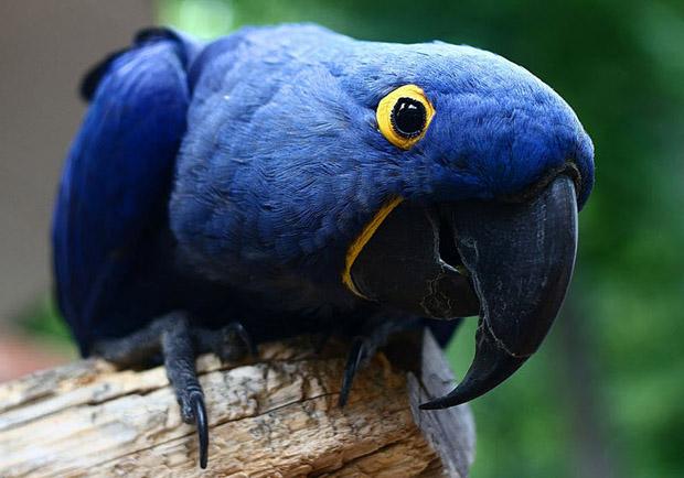top 10 loai chim dep nhat the gioi - Top 10 loài chim đẹp nhất thế giới