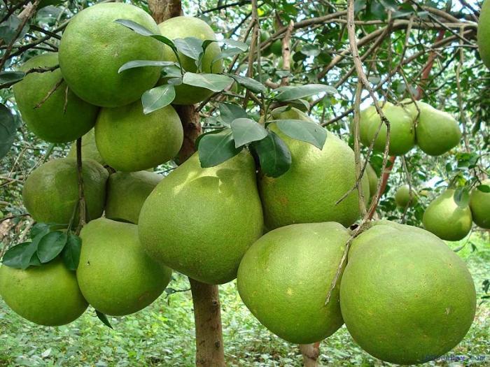 top 10 loai thuc pham tot nhat cho gan - Top 10 loại thực phẩm tốt nhất cho gan