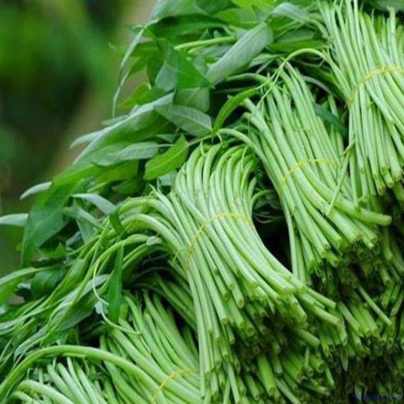 top 10 loai thuc pham tot nhat cho nguoi bi benh viem gan 5 - Top 10 loại thực phẩm tốt nhất cho người bị bệnh viêm gan