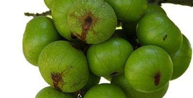 top 10 loai trai cay tot cho me sau sinh mo nen an 5 - Top 10 loại trái cây tốt cho mẹ sau sinh mổ nên ăn