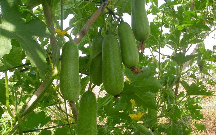top 12 loai trai cay giup me bau giai nhiet ngay nong 6 - Top 12 loại trái cây giúp mẹ bầu giải nhiệt ngày nóng