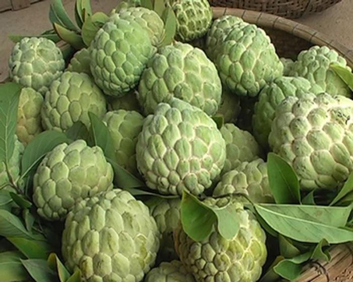 top 13 loai trai cay tot nhat cho ba bau 12 - Top 13 loại trái cây tốt nhất cho bà bầu