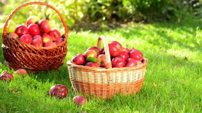 top 13 loai trai cay tot nhat cho ba bau 3 - Top 13 loại trái cây tốt nhất cho bà bầu